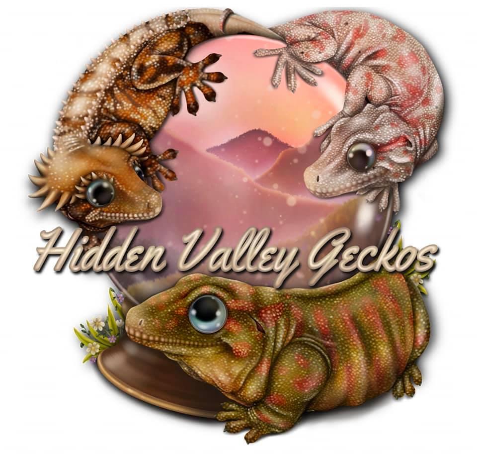 Hidden valley geckos