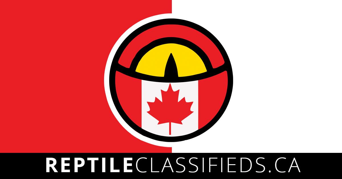 Reptile Classifieds!